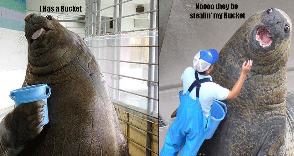 POOR MISTER ELEPHANT SEAL TheyBeStealinMyBucketSeal